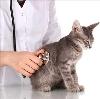 Ветеринарные клиники в Бологом
